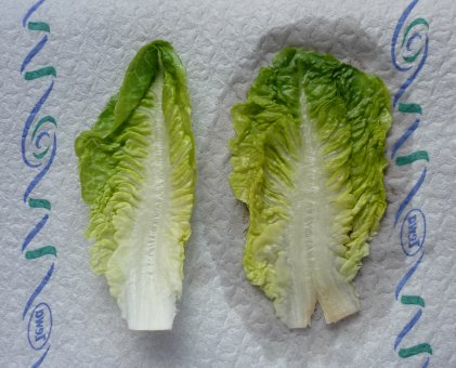 angemachten salat aufheben